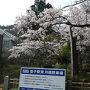 地元草加を始発出発。 伊勢崎線→武蔵野線→中央線と乗り継ぎ笹子駅で下車8:00。笹子駅は無人です。トイレ有り。 笹子駅改札を出ると満開の桜でお出迎え。