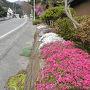 笹子峠は甲州街道を左に歩きます。通り沿いのご家庭の庭先は花できれいに飾られています。