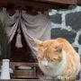 最終日もぱっとしないお天気。 尾道の猫の道を探索します。  [neko027]