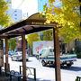 地下鉄南北線 東大前を降りて   本郷通りを行く    銀杏並木が美しい