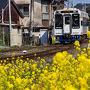 2017年3月19日、田平へ向かう途中、松浦鉄道の久原駅で、満開の菜の花を見つけ、しばし道草。