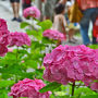 愛知県瀬戸市で紅葉の有名な岩屋堂公園
