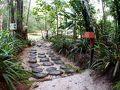 【Amazon Ecopark Lodge】  これは、ホテル敷地内にあるジャングルを抜けると.....