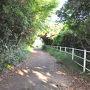 【 伊良湖岬遊歩道 】   駐車場から山越えで伊良湖岬灯台まで行く遊歩道があります。  この道を通るのは初めてで、木々の間から海を見ながらの、気持ち良い散歩でした。