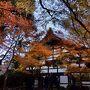 【竜安寺】12月になっての紅葉を見に廻ったのですがこの金土の寒さのせいか、12月1日のネットで見頃とあった毘沙門堂も光明寺も見頃を過ぎていました。そんな中で石庭が有名な竜安寺は'あたり'でした。竜安寺は紅葉のイメージがなかったのですが、「そうだ京都に行こう」のブログで今週のおすすめに竜安寺がでていたのでだまされた思いで行って来ました。竜安寺にこんなにモミジがあるとは思いませんでした。しかもきれいなモミジがまだまだ見る事ができます。