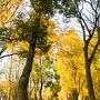 上野公園内の黄葉風景。