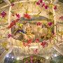 大 胡蝶蘭展  天井 吸い込まれそうな・・・  優雅な 世界を 楽しみめます・・・  フォレストヴィラ