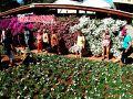 【Atibaia アチバイアという小さな町で日系人が始めたイチゴ祭】  ここは、「花」の祭典でもありますんで、お花を売る場所も用意されています〜
