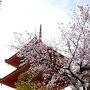 まあ三重塔の横にも桜もぼちぼち咲いているようなので清水寺といえば「桧舞台」!「清水の舞台」を目指して進みます。