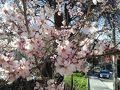 旅行記に入る前に、トルコの春をご紹介♪  3月10日撮影@アンカラ アンカラではアーモンドや杏、梅の花が咲きます。桜に似てて可愛いですよね。今年は暖冬だったので、思ったより早く春が来ました。