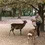 しばし鹿と戯れます。 私は鹿せんべいなど買って、鹿たちともっと遊びたかったのですが、妻はそこまで興味なさそう。