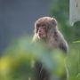 今日は大隅半島方面を目指します。  途中で出会ったお猿さん。