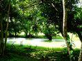 駐車場でバスを降り、参道を歩いて進んでいきます。 異様なほど緑色の池がありました。