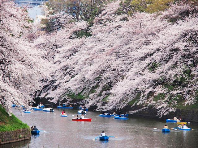 東京で絶景の桜を楽しもう!おすすめの花見スポット10選
