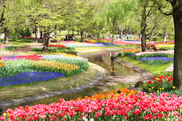 国営昭和記念公園のFlowerFestival