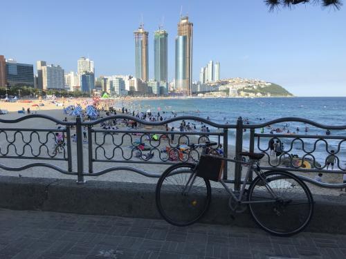 風を切って青い海を感じる、海辺のサイクリング