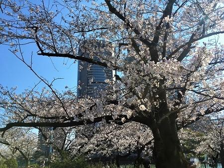 神戸から弁天町アートホテルでランチビュッフェとお花見