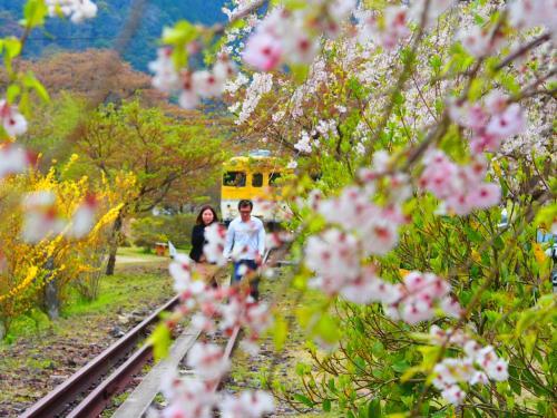 広島の桜 2019
