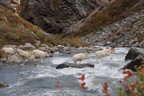 秋の米国アラスカ州とカナダ・ユーコン準州 ドライブ15日間(その2:デナリ国立公園)