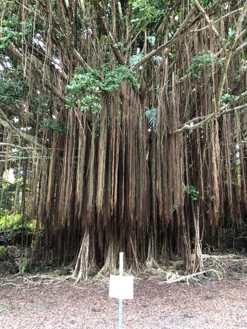 2019年9月 大人4人の詰め込みハワイ島旅 ②カウマナ洞窟~宿