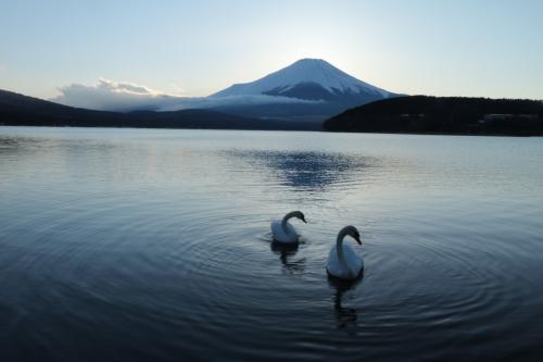 富士山が美しすぎて♪ 西湖野鳥の森公園、西湖いやしの里根場&山中湖ダイヤモンド富士♪