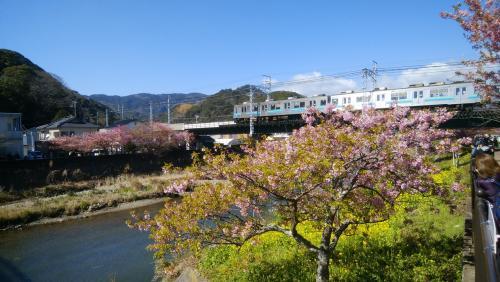 連休パス二日目は、伊豆へ河津桜と下田散策にちょっとだけ熱海梅園