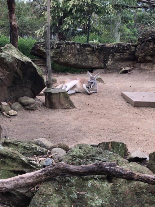 私のアナザースカイ シドニー ~シーライフシドニー&タロンガ動物園~