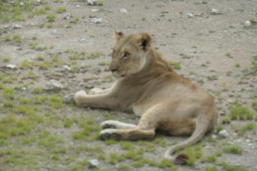 ナミビア旅行記 2