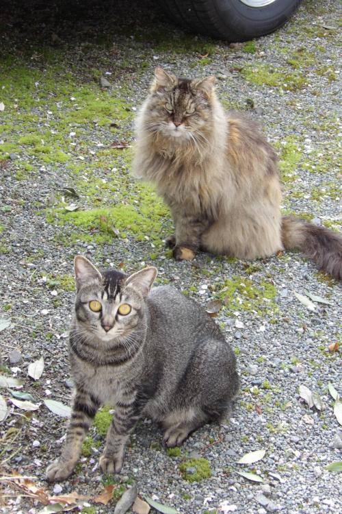 飯沢の猫たち