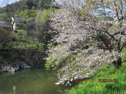 街歩き13・ぶらり桜花見