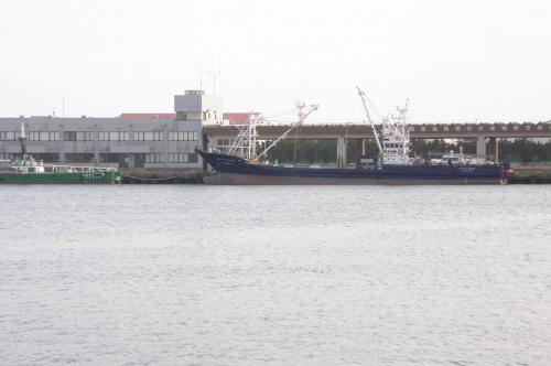 波崎新港でバードウォッチング [2005](3)