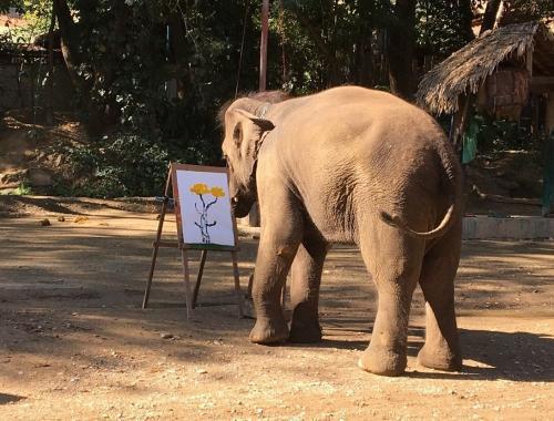 タイ旅行2日目:チェンマイでエレファントキャンプ・お寺巡り・カントークディナー