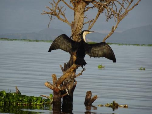 ケニア・サファリ旅行③ナイバシャ湖
