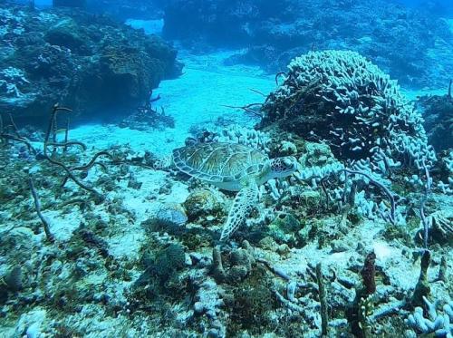 カリブ海のおおきな生き物