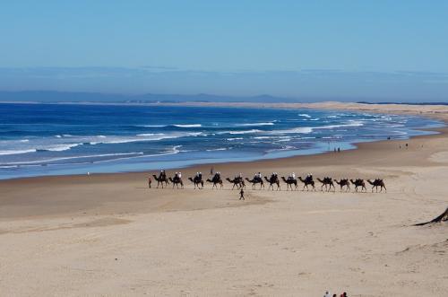ポストコロナ オーストラリアNSW州北部海岸線 ローカルのドライブ旅1 (Roadtrip to NSW north coast)