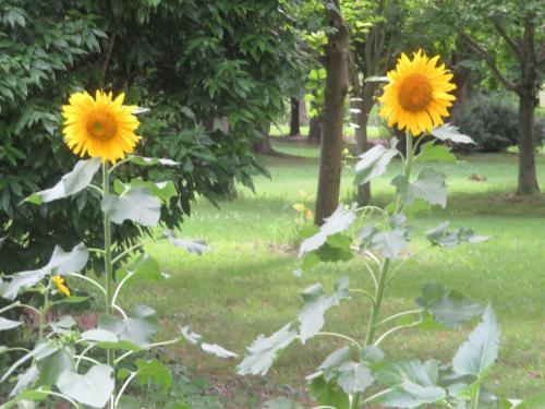 越谷の埼玉県健康福祉村内を散策しました