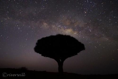 インド洋のガラパゴス!秘境ソコトラ島の旅⑥~龍血樹と天の川編