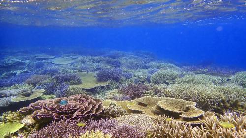 宮古島のサンゴ復活!超激美!大神島「オーシャントライブ」2020 6度目の訪島