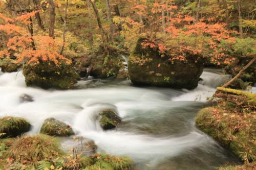今年初めてのエア旅♪ 錦繍の紅葉を愛でるみちのくの旅5日間♪ 1~2日目 十和田湖、奥入瀬川、蔦沼