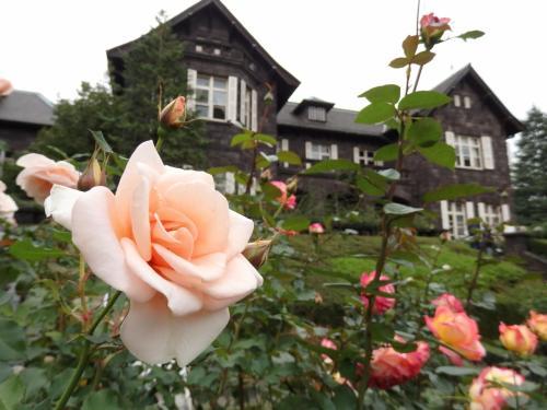 秋バラいっぱい♪紅葉始めの旧古河庭園