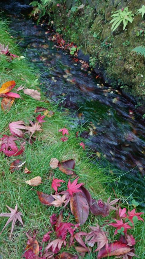 山梨忍野八海 富士山と紅葉の1Dayトリップ