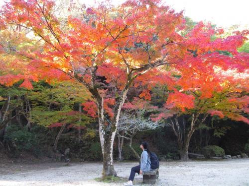 コロナ対策しつつ一人旅してきました ④早朝尾道散歩、岩国で紅葉編
