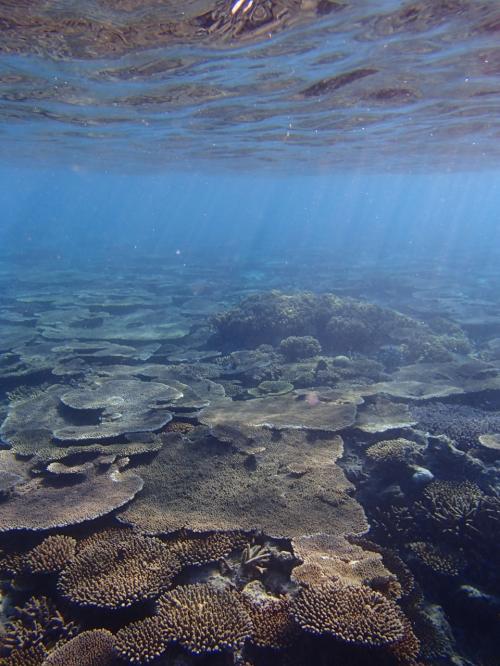 11月の夏日にシュノーケル<゜)))彡離島以上のシークレットビーチで海遊び