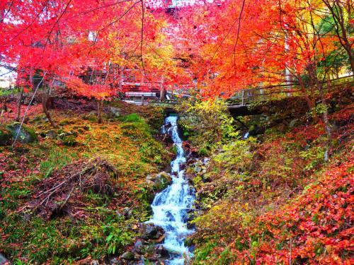 ゲロゲロッ!! 下呂温泉で紅葉狩り★娘から母への親孝行旅♪
