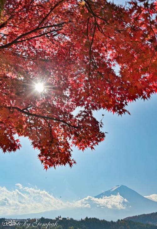 今年最後の山中湖ロッジ滞在 ~河口湖および山中湖の紅葉~