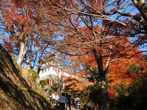 秋の「白川郷」~紅葉の「郡上八幡城」