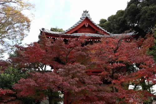 NHKで放送された本土寺の紅葉