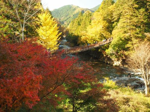 紅葉ハイキング 秋川渓谷から広徳寺の大銀杏