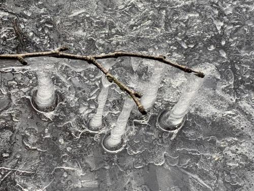 *真冬の散歩道* 足跡をたどって…