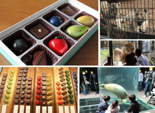 宝石のようなチョコを食べながら2020年の旭山動物園の想い出を振り返る 旭川市